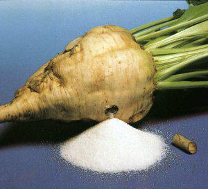 сахарная свекла полна сахарозы