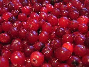 клюква полезная ягода
